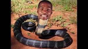 Durant Snake2
